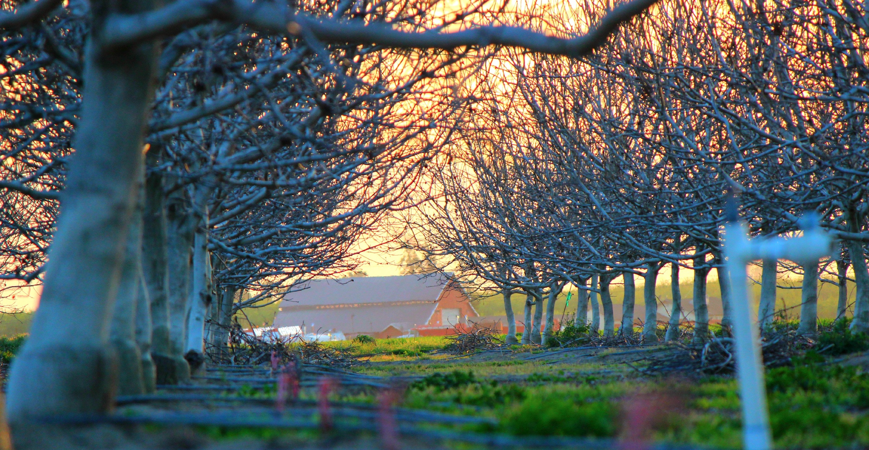 image of barn through trees in distance